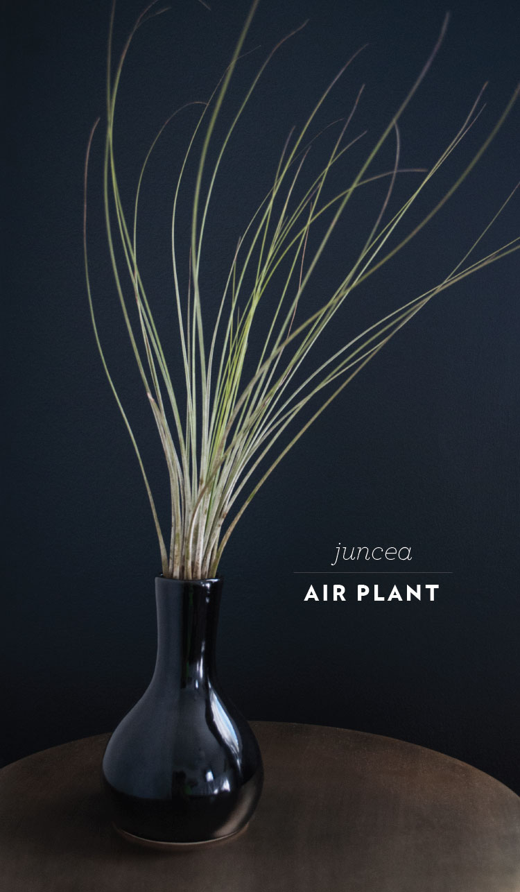 rft_plant12