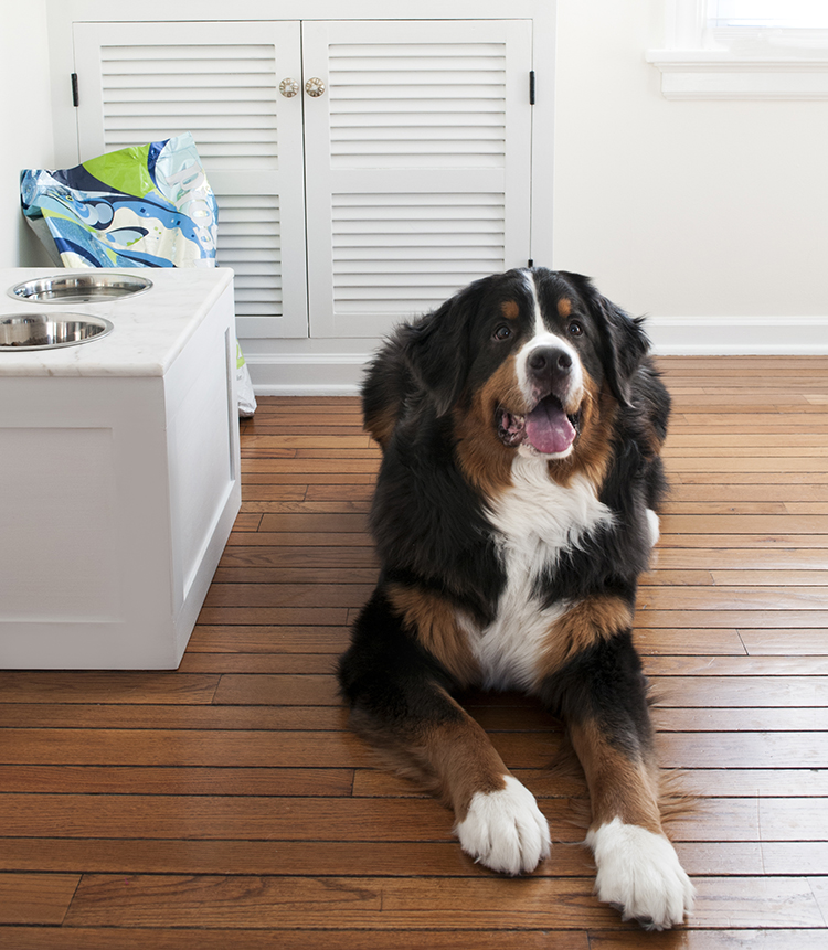 Dog Feeder DIY | Room for Tuesday