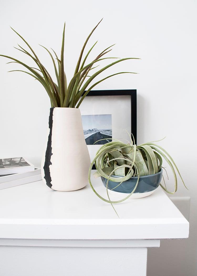 Watering Air Plants Is Super Simple