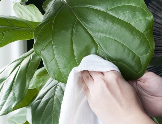 Houseplant Tips