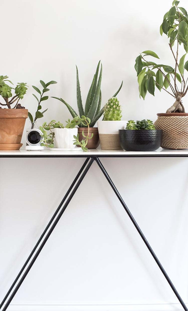 Camera Hidden Amongst Plants