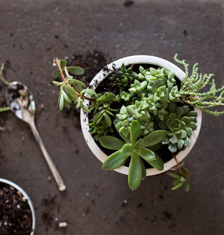 succulent-diy