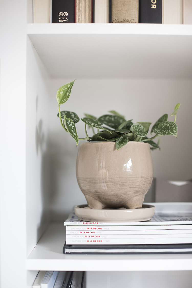 Plant on Bookshelf
