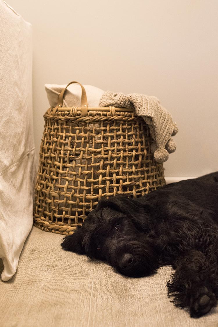 Cozy Dog in Living Room