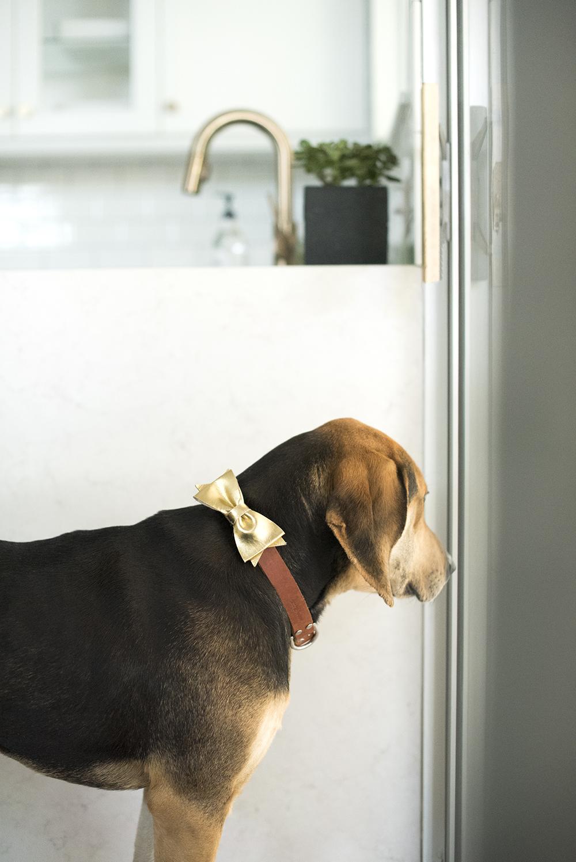 Dog In Kitchen