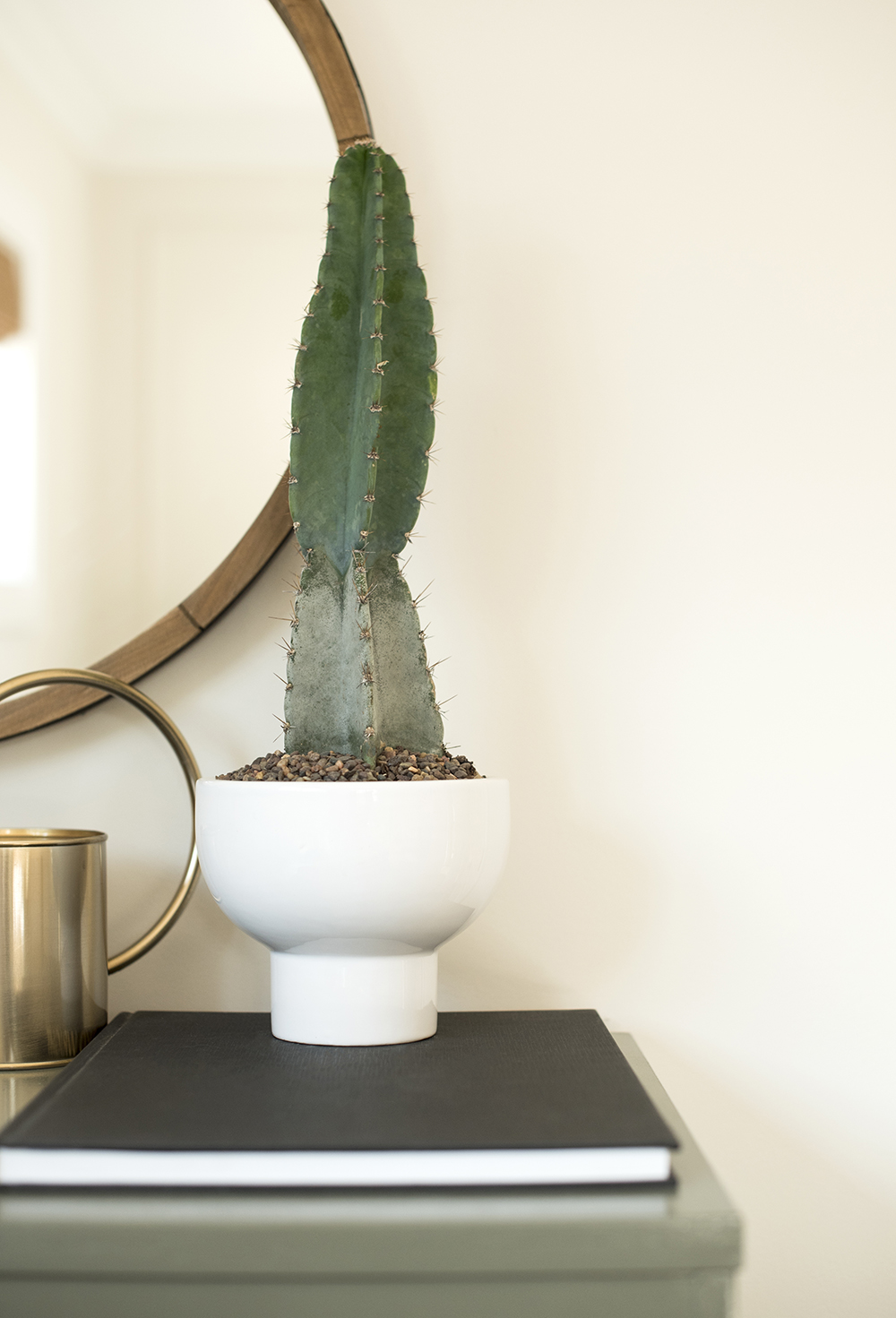 Cactus in Modern Planter