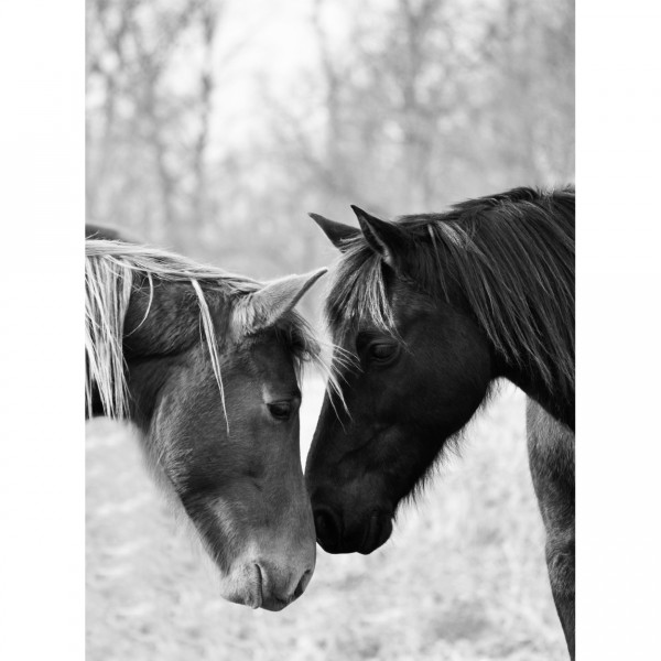 dusty + derby black and white print