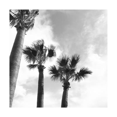 palms print